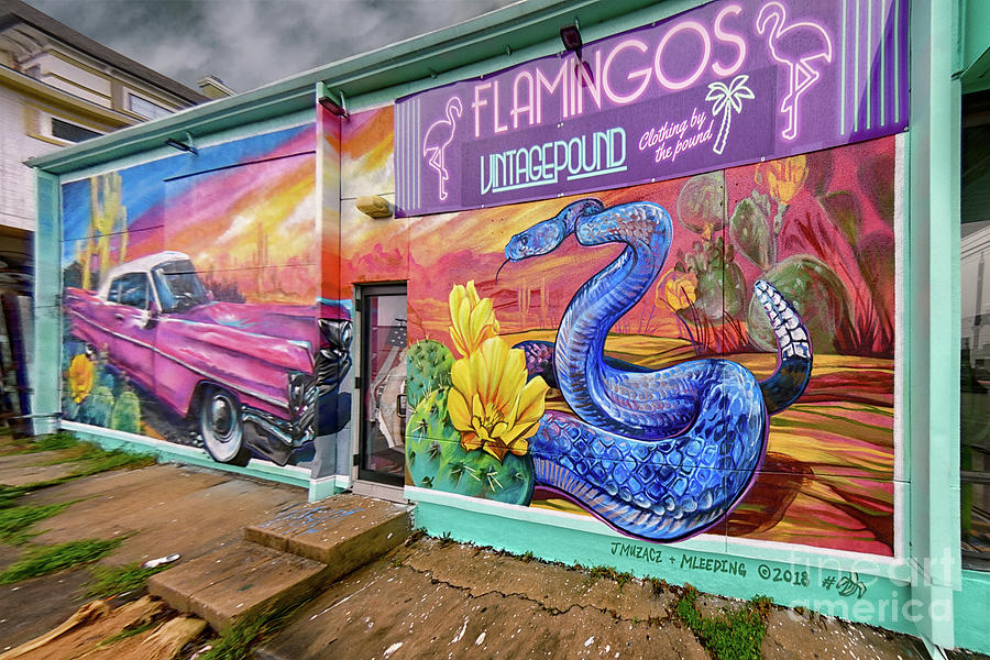 Flamingos Thrift Store Houston Photograph