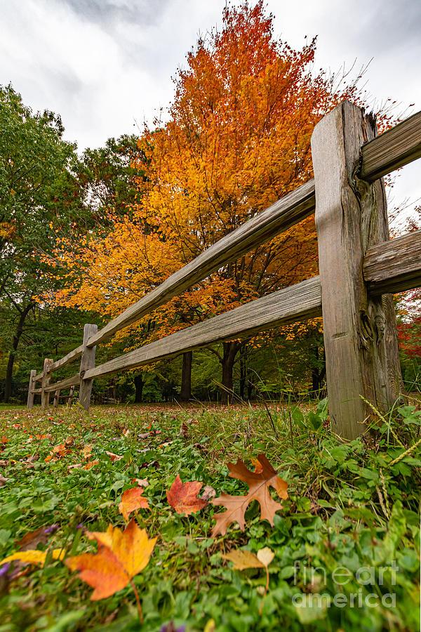 Fleeting Fall Foliage by Amfmgirl Photography