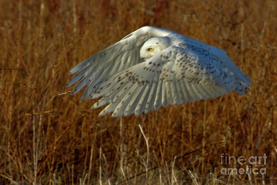 Flight by Butch Lombardi
