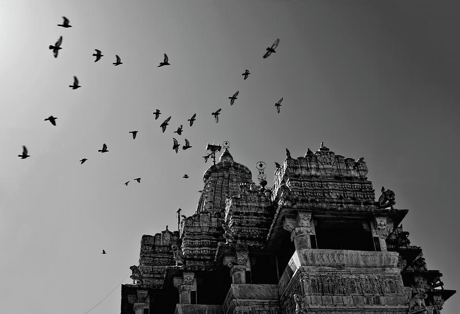 Flight Of Birds Above Jadgish Temple Photograph by Prashanth Naik