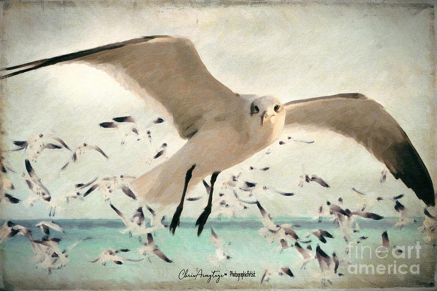 Flight of the Gulls by Chris Armytage
