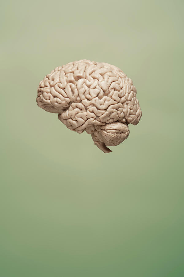 Floating Brain On Green Background Photograph by Chris Parsons