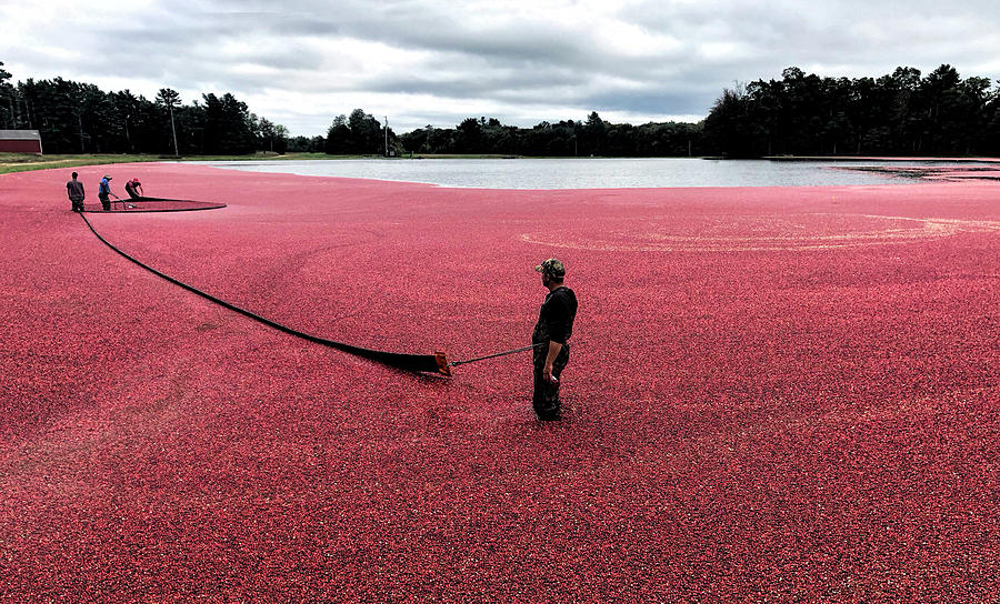 FLOATING CRANBERRIES by MaryAnn Barry