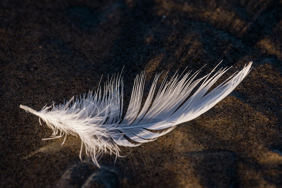 Floating Gull Feather by Robert Potts