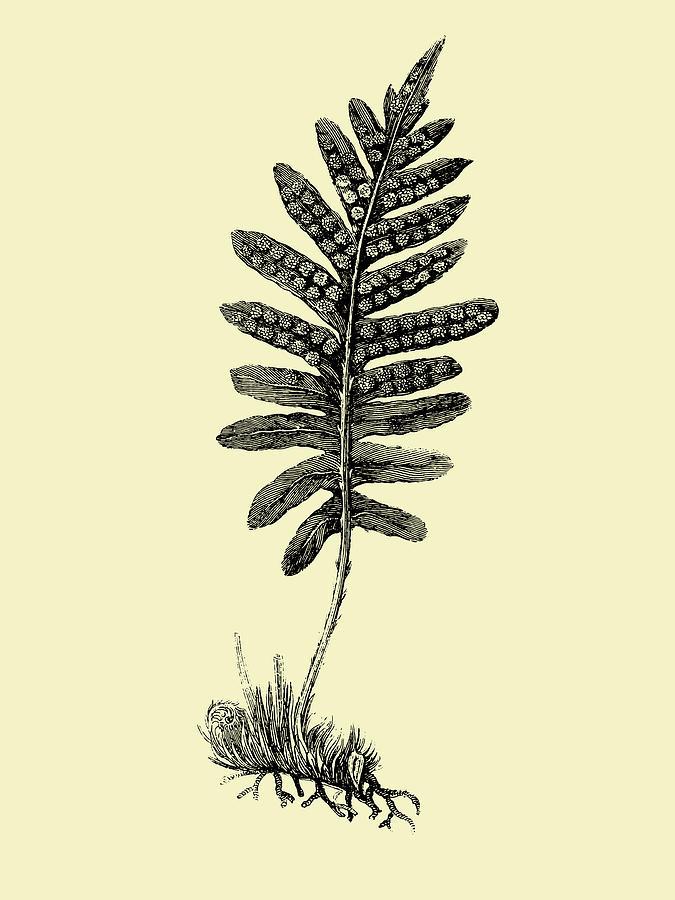 Leaf Mixed Media - Floating Leaf Branch by Naxart Studio