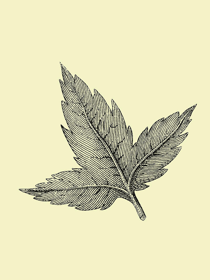 Leaf Mixed Media - Floating Leaf by Naxart Studio
