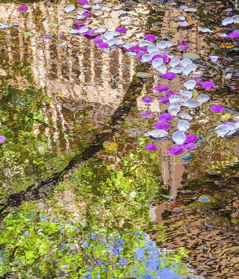 Flower Photograph - Floating Magnolia Petals by Jonathan Hansen