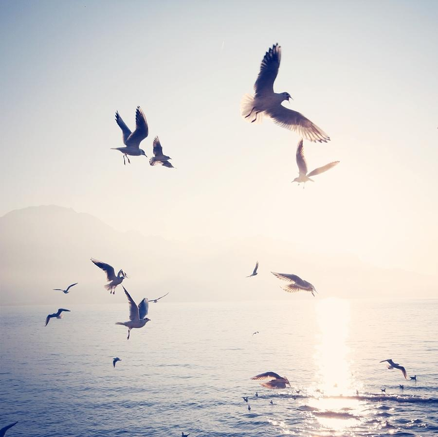 Flock Of Birds Flying Over Sea On Sunny Photograph by Toni Barth / Eyeem
