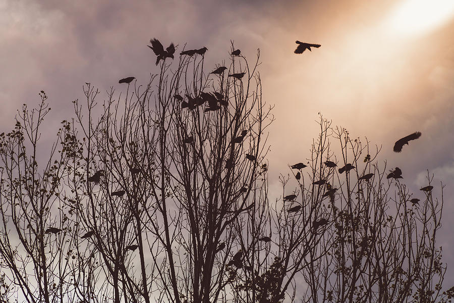 Flock Of Crow by James BO Insogna