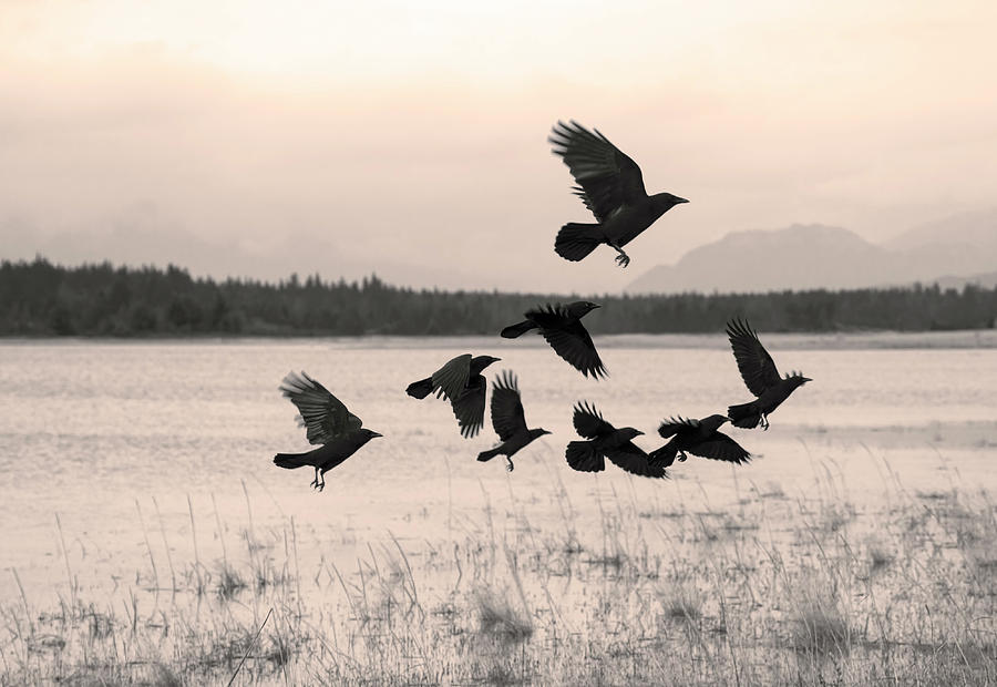 Flock of crows moving on by Michele Cornelius