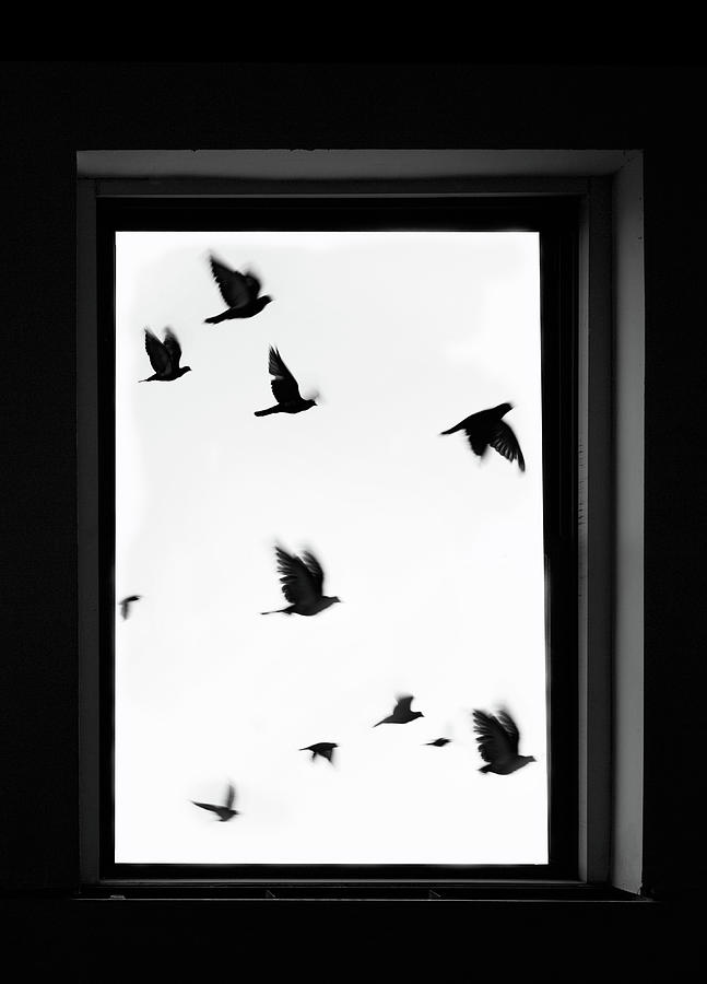 Flock Of Crows Seen Through A Window Photograph by Grant Faint