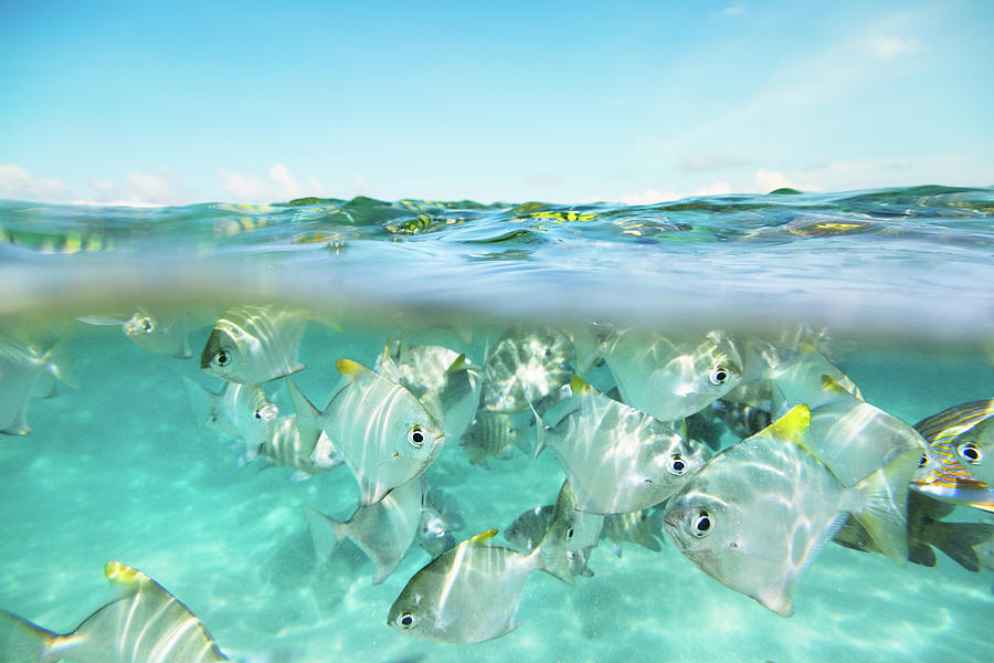 Flock Of Fish Under And Above Water Photograph by Danilovi