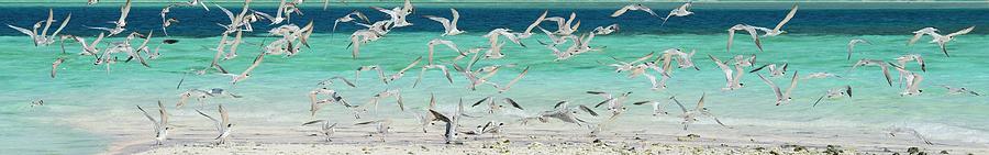 Flock Of Seagulls By Azure Beach Photograph by Christopher Leggett
