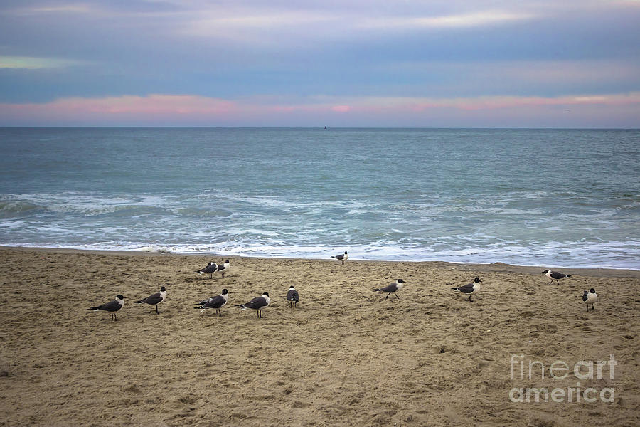 Flock of Seagulls by Colleen Kammerer