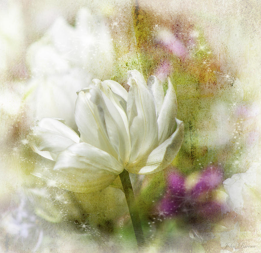 Floral Dust by John Rivera