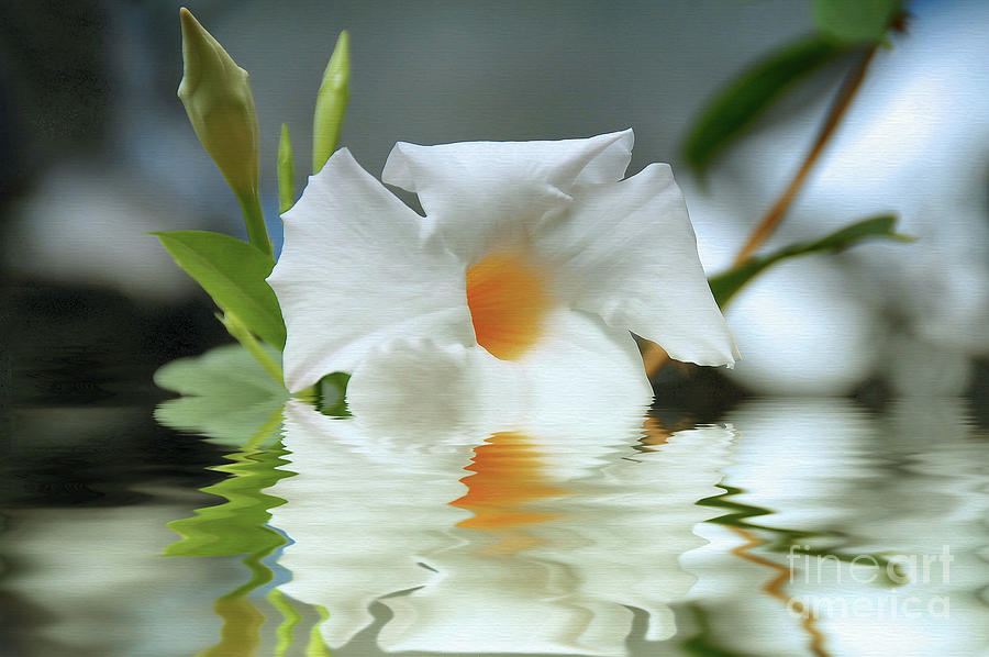 Floral in Water by Elaine Manley