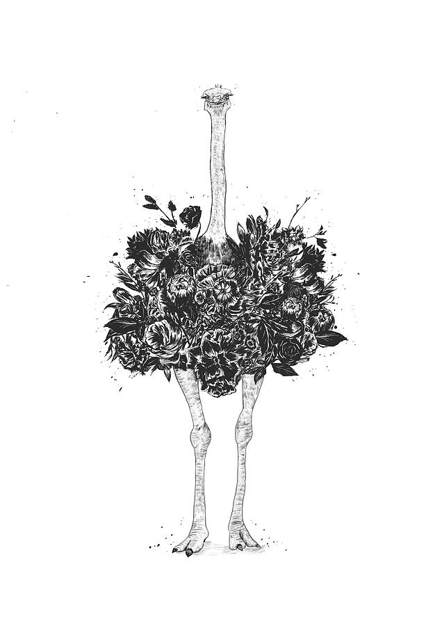 Ostrich Drawing - Floral ostrich by Balazs Solti