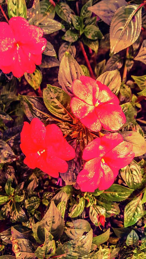 Floral Photograph