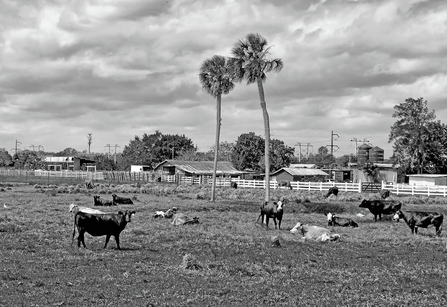 Florida Farmscape by Karl Ford
