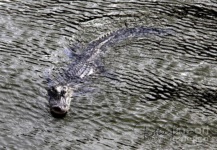 Florida Gator Before Hurricane Dorian Hits by Philip and Robbie Bracco