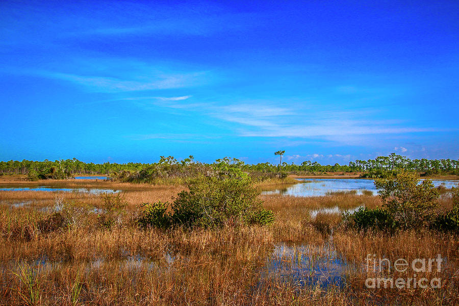 Florida Marsh Land by Tom Claud