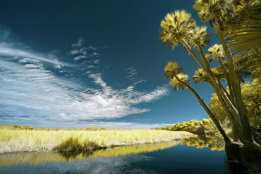 Jon Glaser Photograph - Florida State Park by Jon Glaser