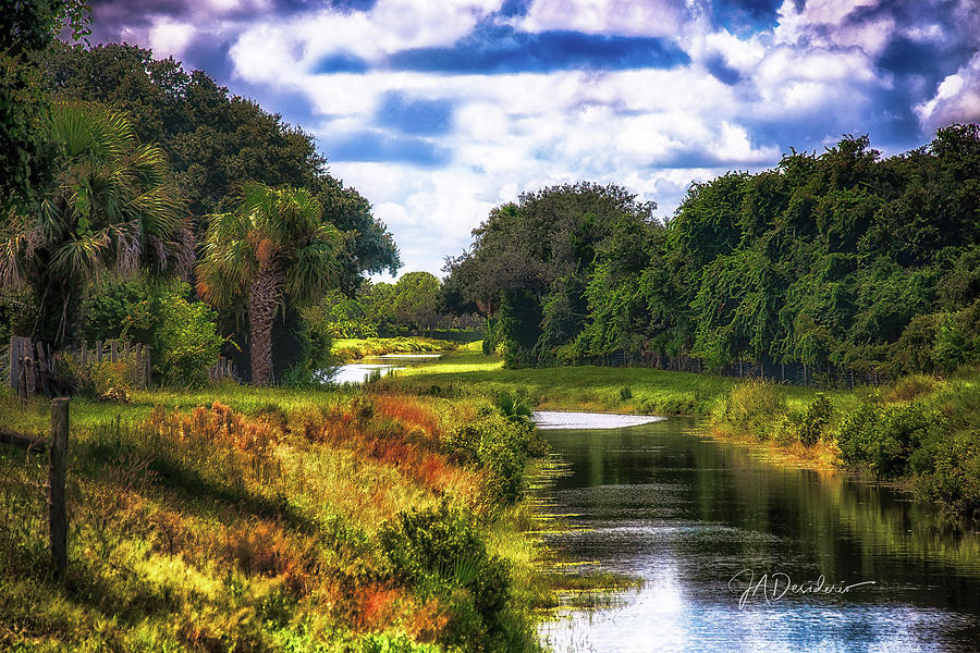 Florida Wilderness by Joseph Desiderio