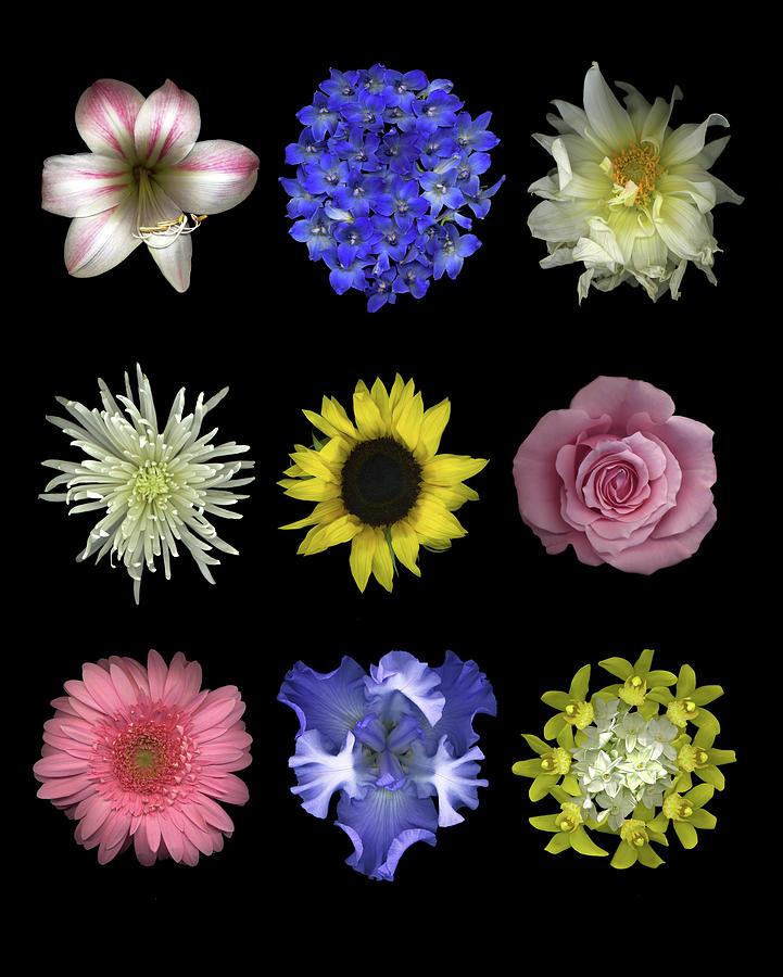 Delphinium Painting - Flower 9 Patch by Susan S. Barmon
