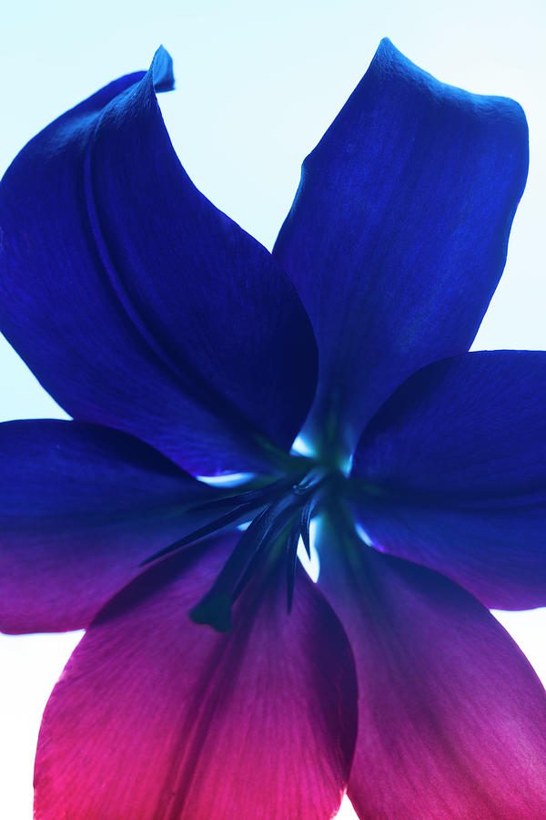 Flower Photograph - Flower Abstract #2, 2013 by Chris Hunt