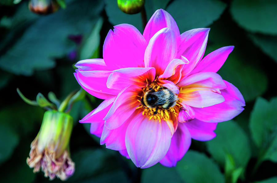 Flower and Bee at Lake Zurich 2 by Pablo Lopez