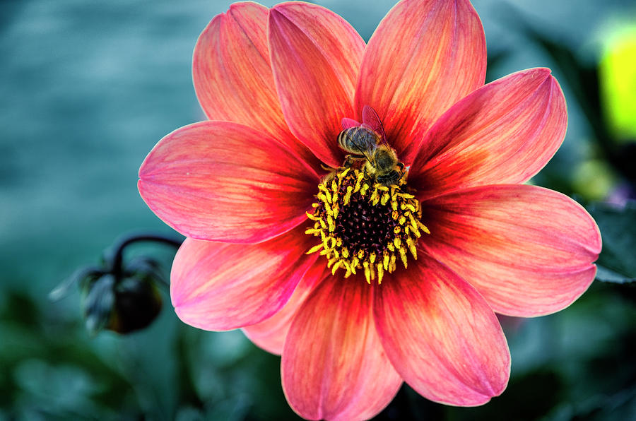 Flower and bee at Lake Zurich by Pablo Lopez