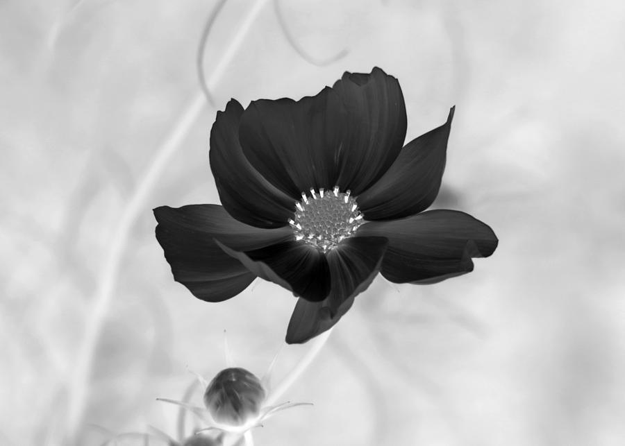 Flower Art Black And White Digital Art