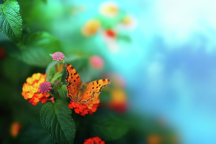 Flower Background With Butterfly Photograph by O-che