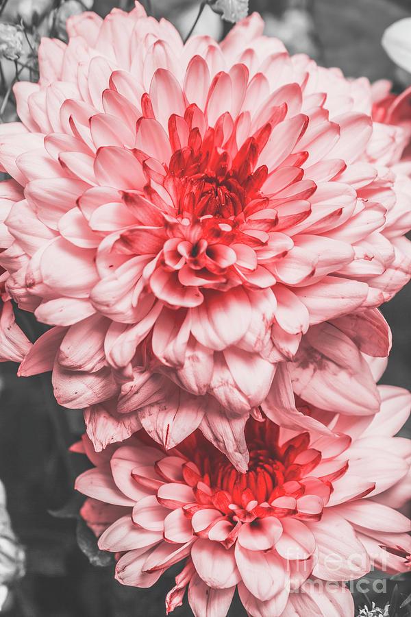 Flower Photograph - Flower Buds by Jorgo Photography - Wall Art Gallery