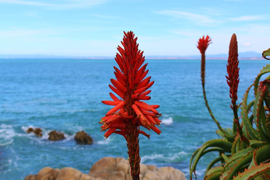 Flower by the Sea  by Christy Pooschke
