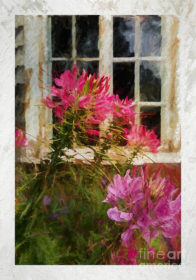 Flower by the Window by Jean Kirby