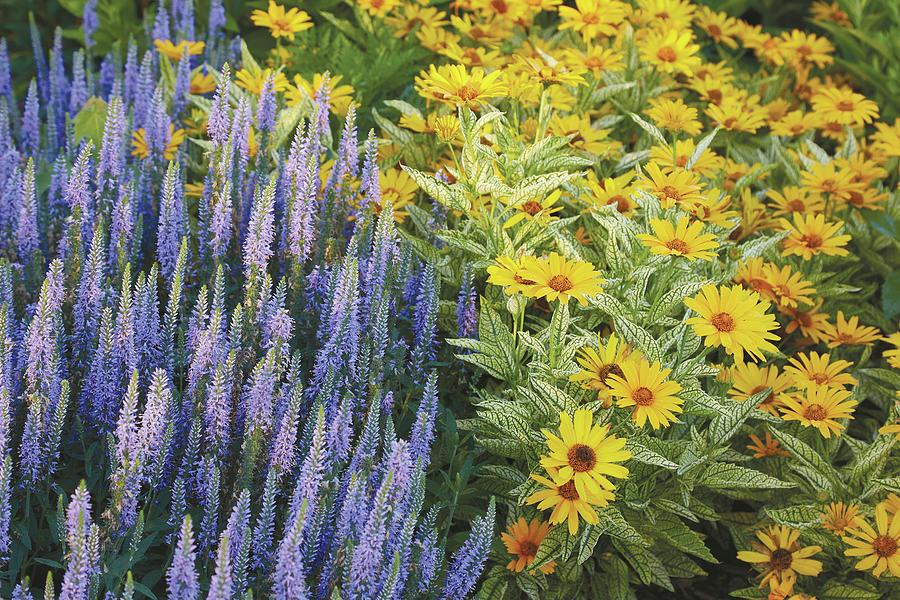 Flower combo by Garden Gate magazine