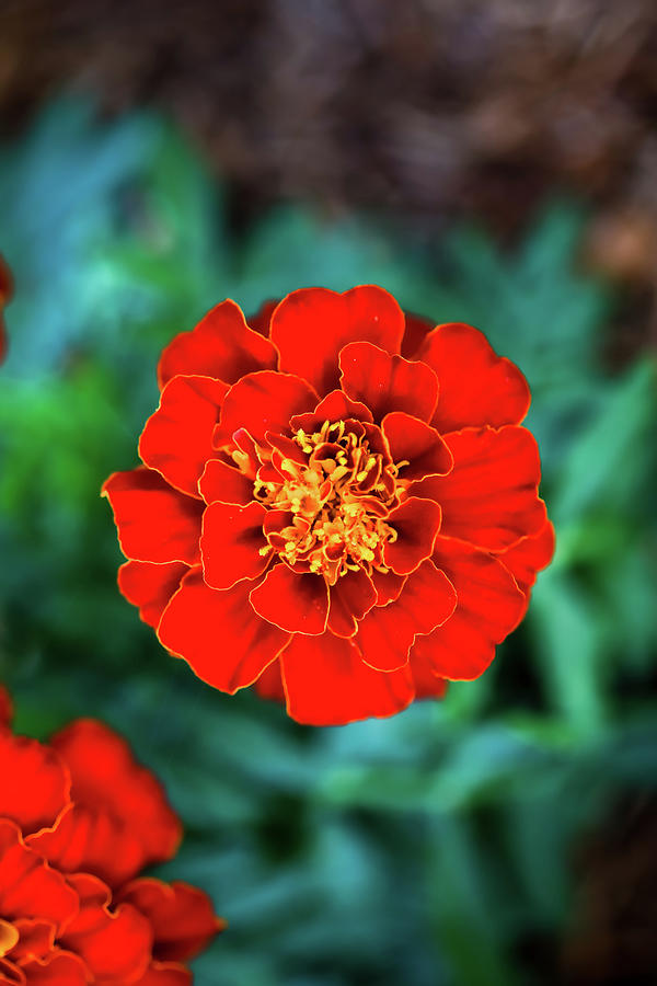 Flower Delight Photograph