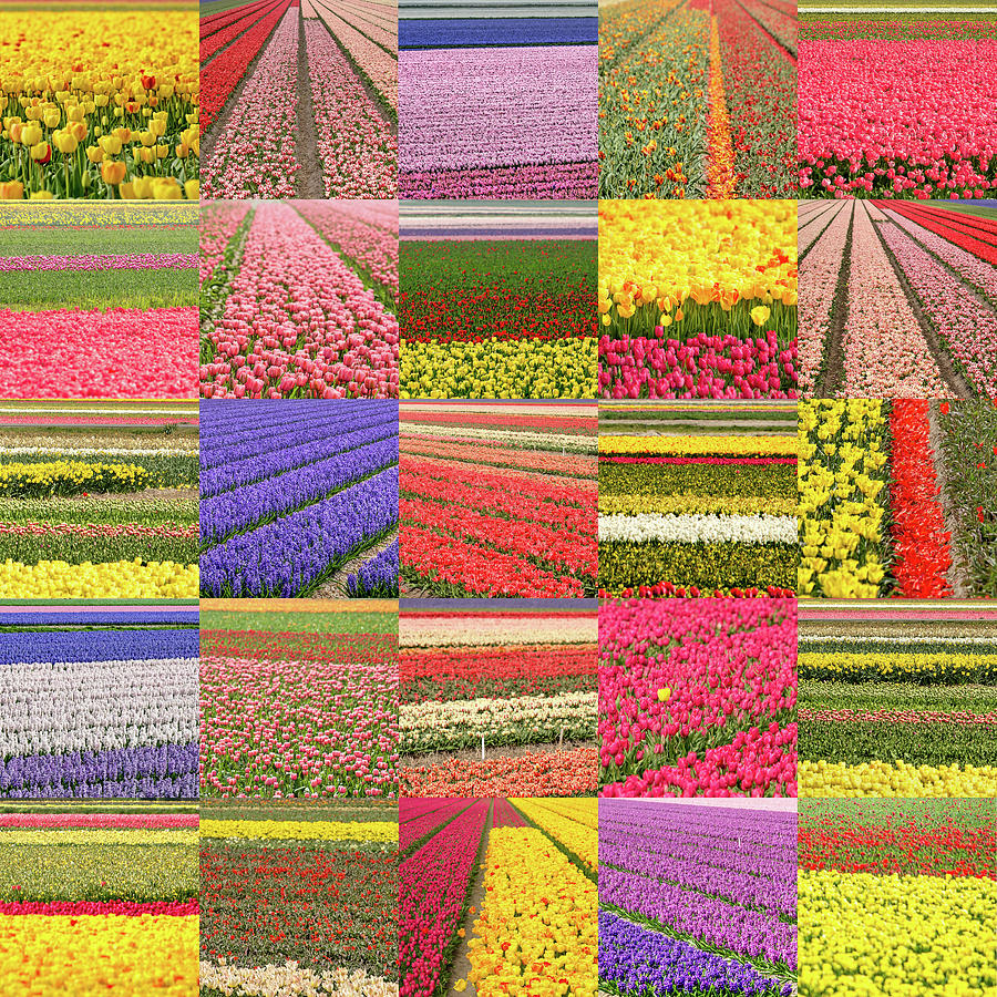 Flower Field Collage by Frans Blok