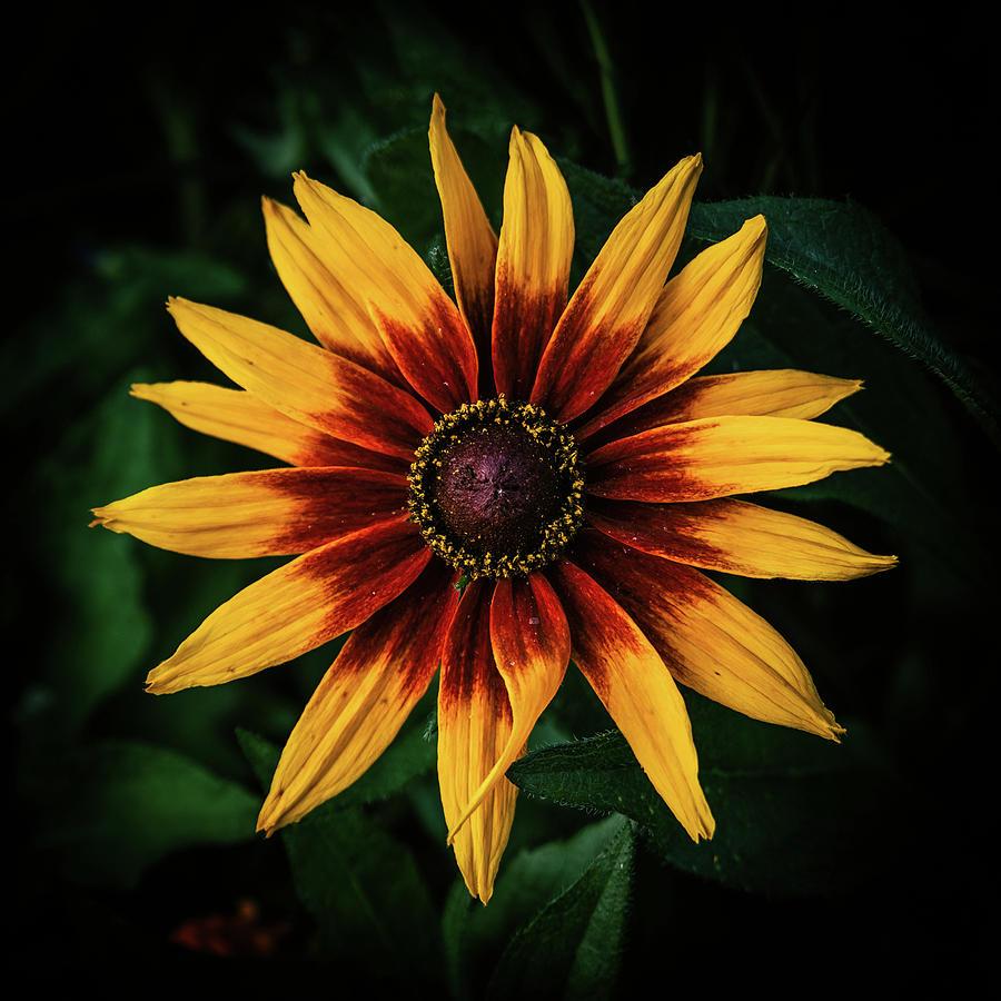 Flower by George Grigoriadis