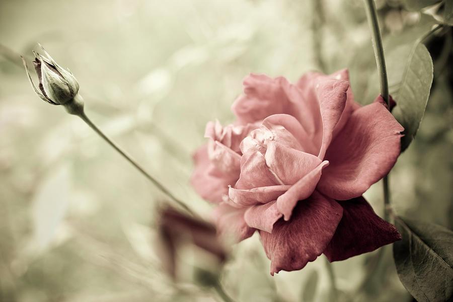 Flower In The Garden Photograph by Michellegibson