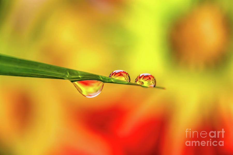Flower In Water Droplet by Adrian Evans