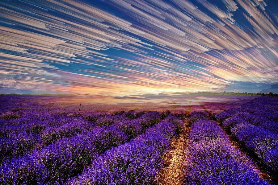 Flower Landscape Photograph