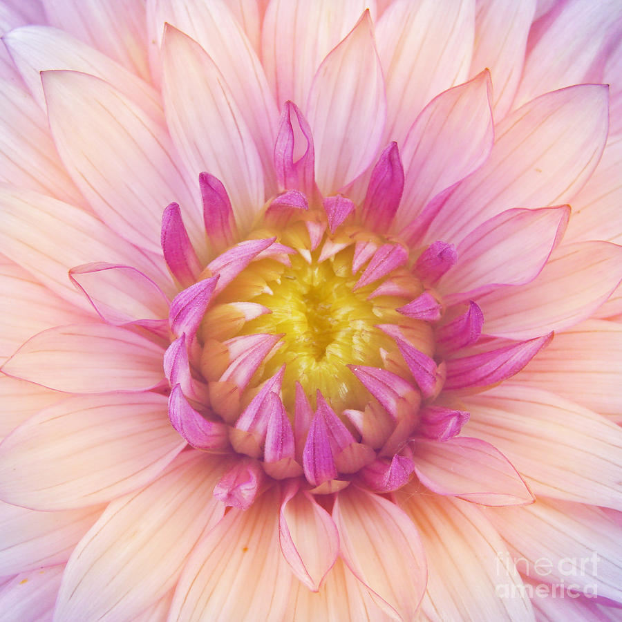 Big Photograph - Flower Macro by Danielo
