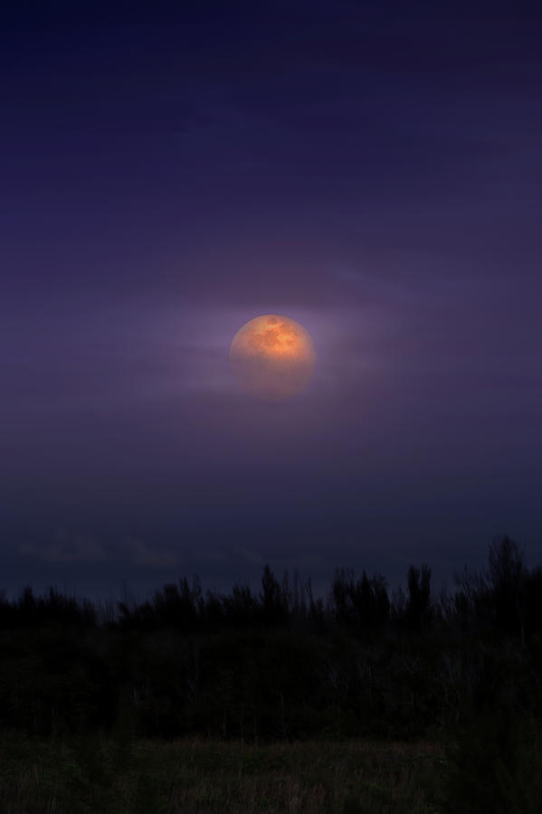 Flower Moon Photograph