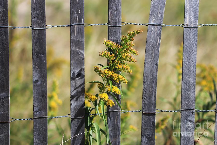 Flower On Snow fence by Karen Silvestri