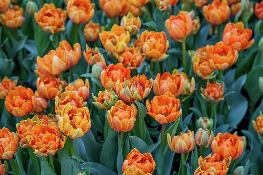 Flowers Photograph - Flower Patterns Collection Set 05 by Az Jackson