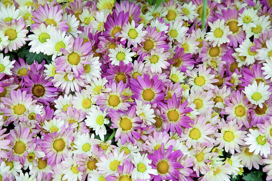 Flowers Photograph - Flower Patterns Collection Set 10 by Az Jackson