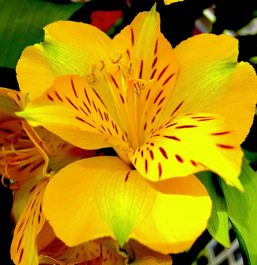 Flower Power Aloha in Yellow by Joalene Young