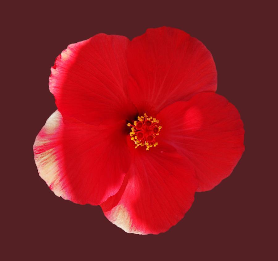 Flower Power by Charles Stuart